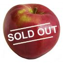 LoboApple Sold Out copy